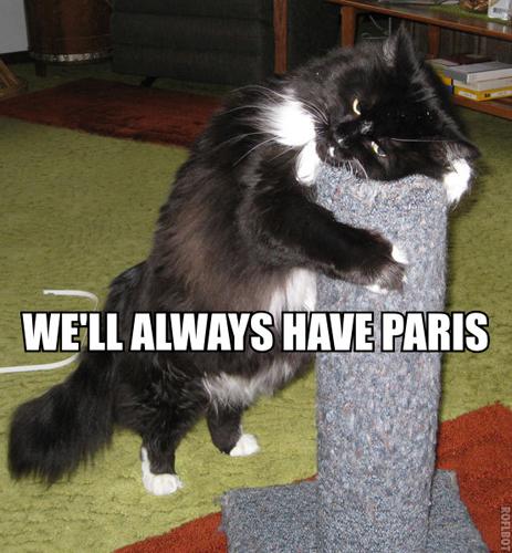 cat hugging scratching post