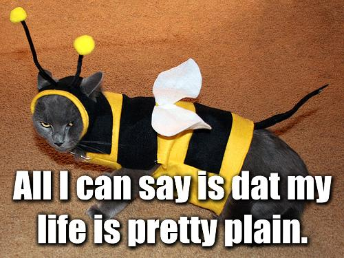 bee costume plain cat macro