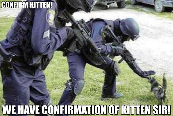 military guns with kitten and grass