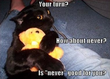 cat refusing to share soft toy