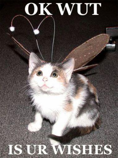 fairy_kitten