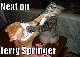 jerry springer fighting cats lol cat macro