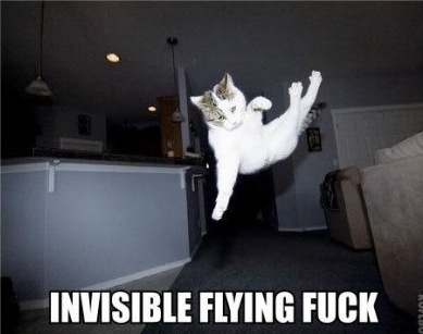 invisible flying fuck lol cat macro
