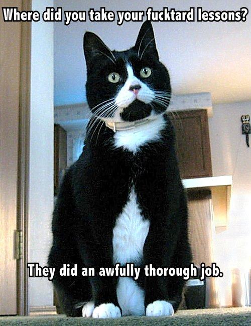 fucktard lessons lol cat macro