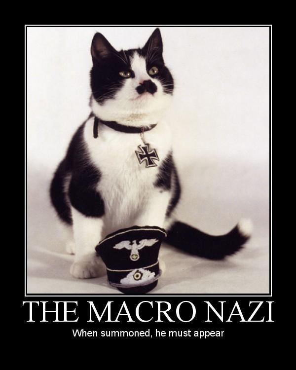 kitler cat macro nazi poster