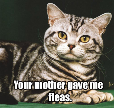 ur mom your mother gave me fleas lol cat macro
