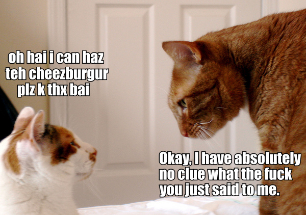 two cats talking lolspeak cat macro