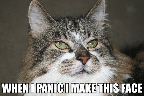 panic make this face lol cat macro