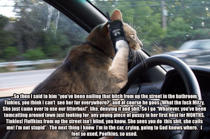 phone_cat_driving_gossip_cat_macro