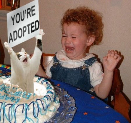 you're adopted birthday cake lol cat macro
