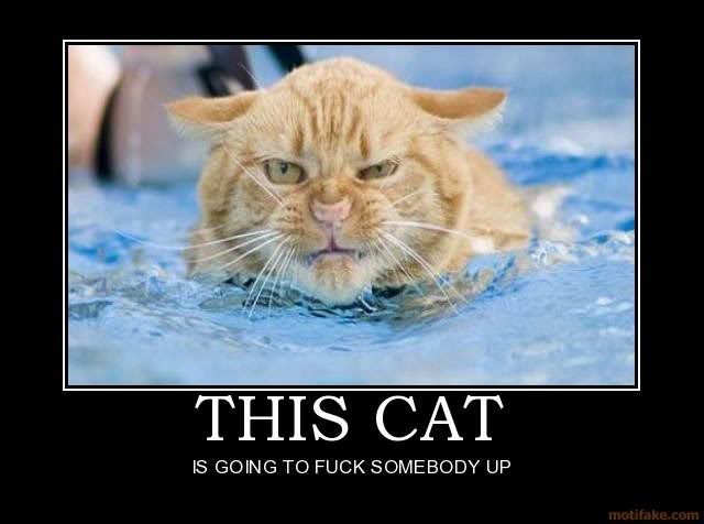 this cat fuck someone swimming pool angry lol cat macro