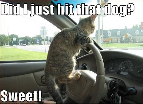 did i just hit that dog sweet driving lol cat macro