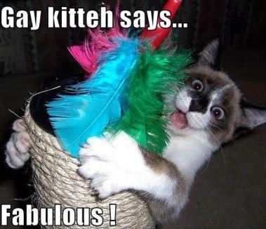 gay fabulous basket feathers lol cat macro
