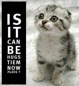 hugs tiem plees plz kthxbai kitten 4chan lol cat macro