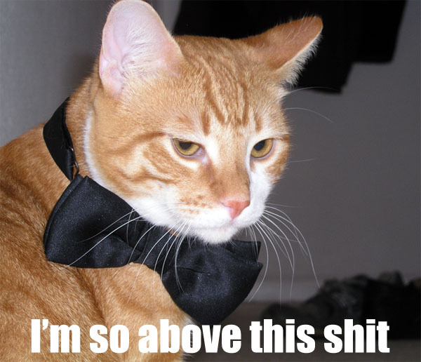 im so above this shit disdain bow tie lol cat macro