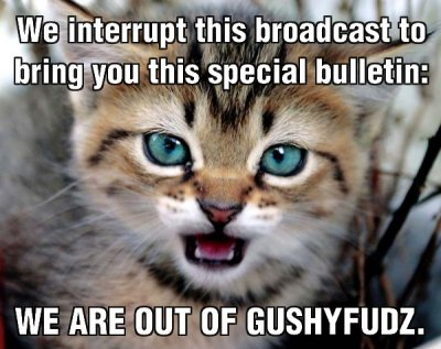 broadcast special bulletin gushy fudz lol cat macro kitten