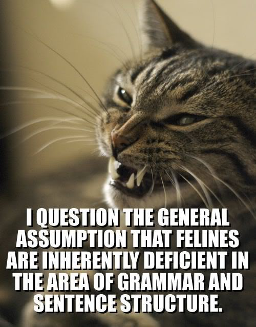 question feline grammar sentence structure words lol cat macro