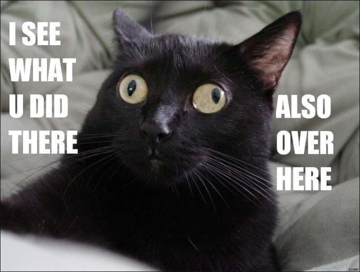 black cat with funny eyes squint i see what you did there meme lol cat macro