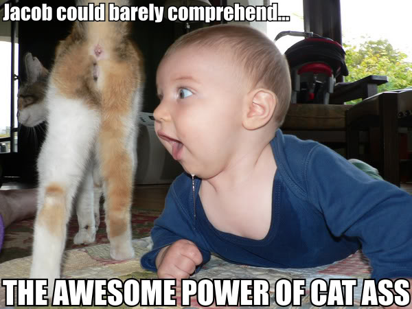 baby kid awesome power of cat ass lol cat macro