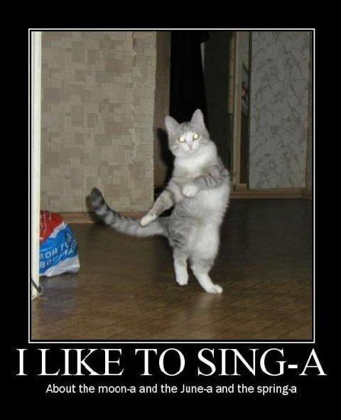 I Like To Sing A Cat Macros