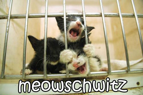 meow auschwitz concentration camp WW2 nazi germans jews kittens lol cat macro