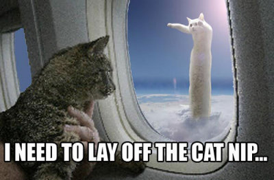 nip catnip longcat aeroplane airplane flying cat macro