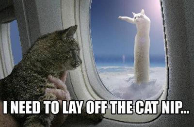nip catnip longcat aeroplane airplane flying cat macro