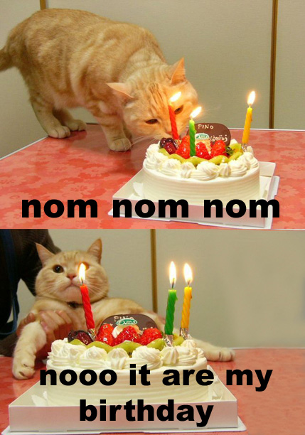 Nom Birthday Cake Dammit Nooo Candles Lol Cat Macro