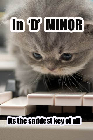 d minor sad saddest piano key schubert kitten lol cat maro