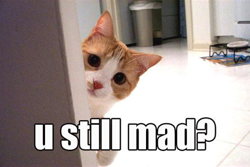 you u still mad angry upset naughty bad lol cat macro