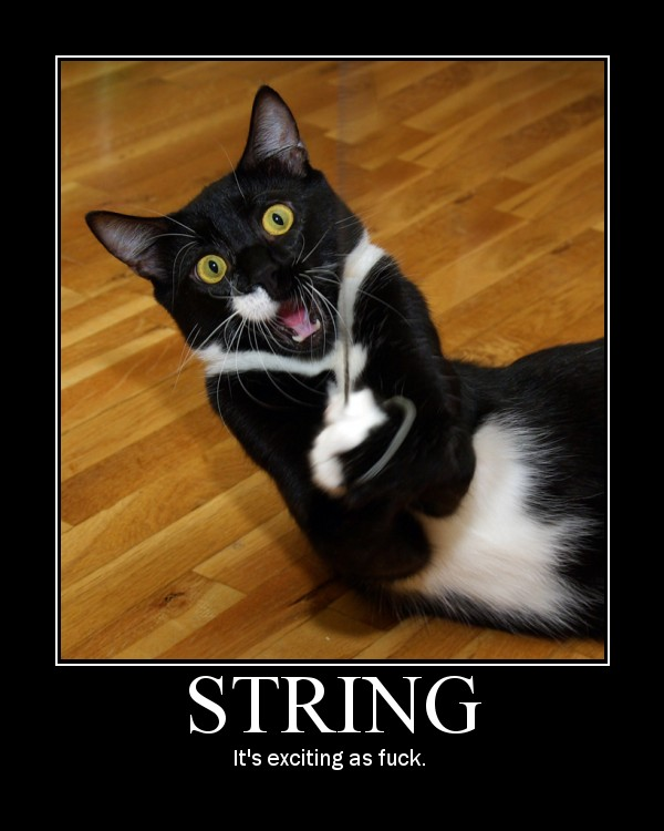 string very exciting as fuck cat games playing lol cat macro