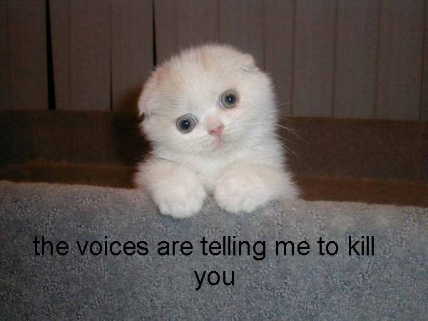 hear voices telling me kill you murder schizophrenia kitty lol cat macro