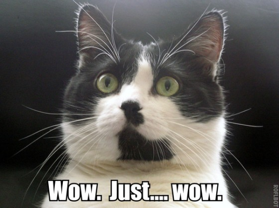 Image result for lolcat surprised
