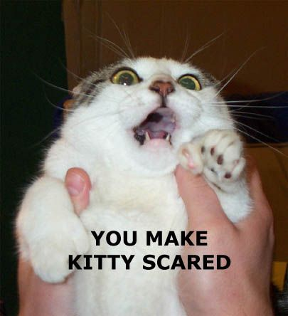 you make kitty scared lol cat macro