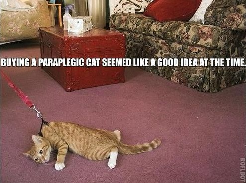buying paraplegic cat leash lol cat macro