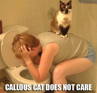 callous cat doesnt care indifferent sufferings sick vomit toilet loo cat macro