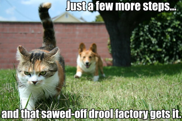 corgi short people drool angry lol cat macro