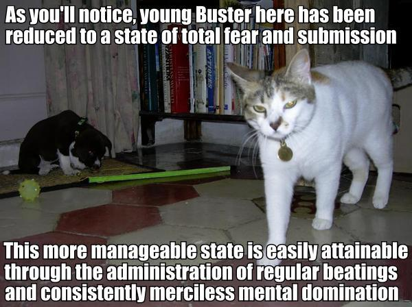 cat domination superiority over dogs lol cat macro