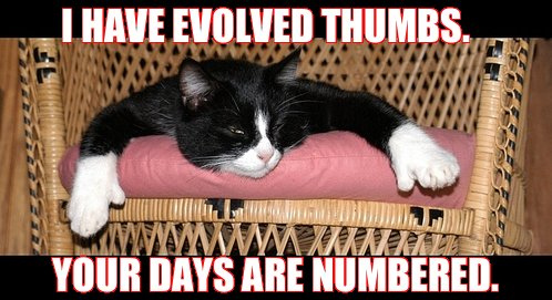 evolution thumbs your days numbered polydactyl lol cat macro