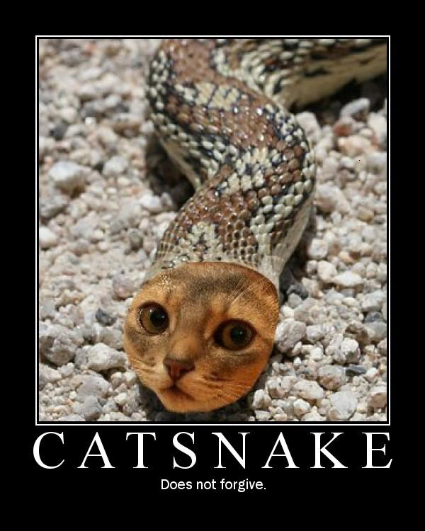 cat snake anonymous does not forgive lol cat macro