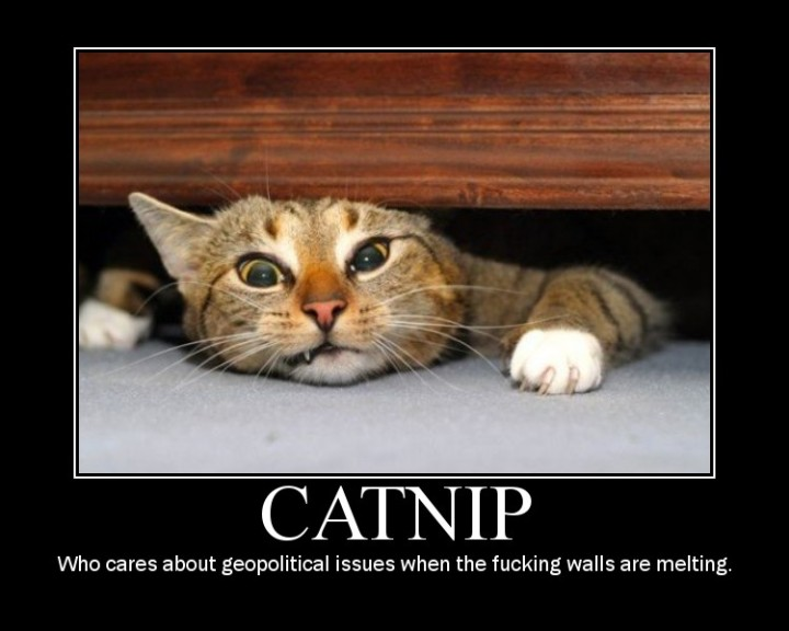catnip  who cares wall melting lol cat macro