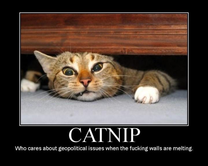 catnip  who cares wall melting lol cat macro