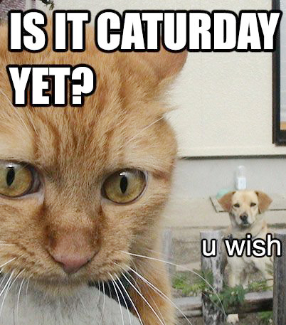 caturday dog lol cat macro