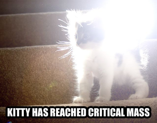 kitty reached critical mass physics lol cat macro
