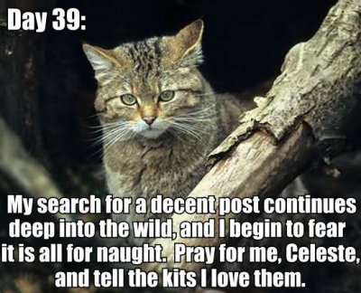 day 39 search for good post wild wilderness explorer lol cat macro