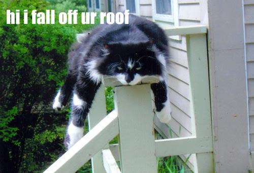falling off roof monorail lol cat macro
