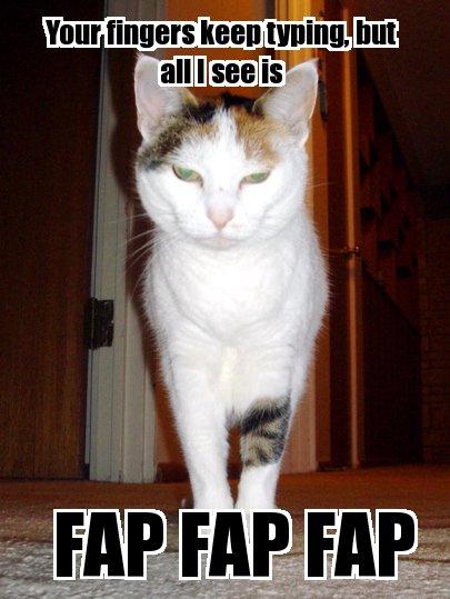 fap fap fap typing sarcastic lol cat macro