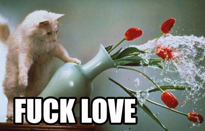 fuck love hate romance flowers lol cat macro