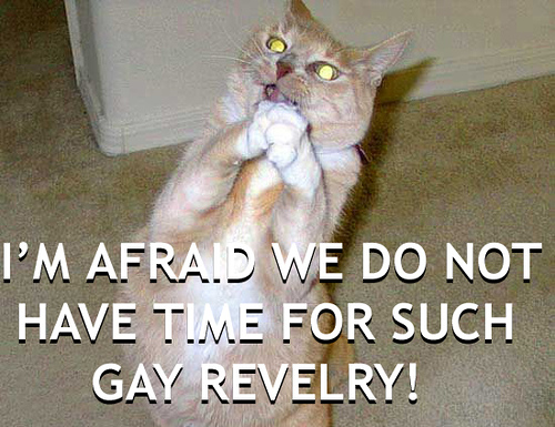 no time for gay revelry faggotry lol cat macro