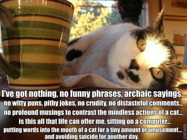 ive got nothing suicide amusement lol cat macro